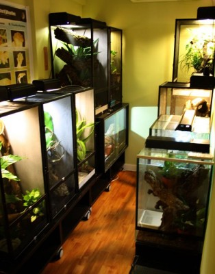 exotic-room-geckos
